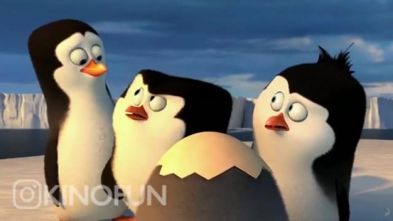 пингвины из Мадагаскара 😄