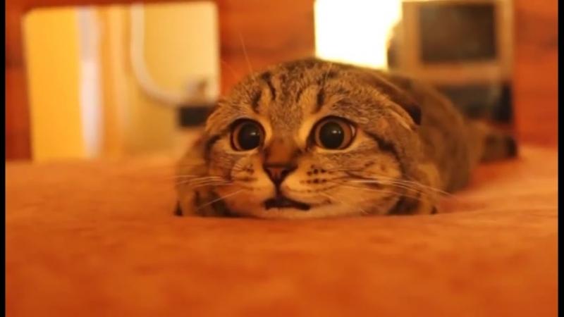 Кот смотрит Ужастики!_HIGH.mp4