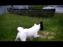 Скунс применил против собаки смертельное оружие