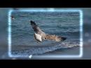 Gulls of the Bluesy Blue Sea