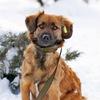 ◤ Приют для бездомных животных ПИФ - Донецк ◢