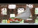 Голубиные яйца ГэЦзы Дань Промышленный способ получения яиц ГуНе ШэнЧань ФанШи Дань Куриные яйца Цзи Дань