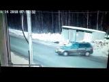 В Ижевске водитель спас школьницу от стаи бездомных собак