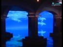 В музее «Вселенная воды» открылась выставка о дельфинах