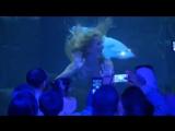 В Парижском  аквариуме появилась русалка.