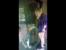 Тигр ласкает беременную женщину