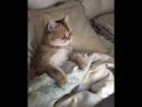 даже котики любят мультики