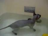 Кот,прикол,ванна,ржака,котэ,няша,лапуля,стеб,ахаха,ржач,няшка :)