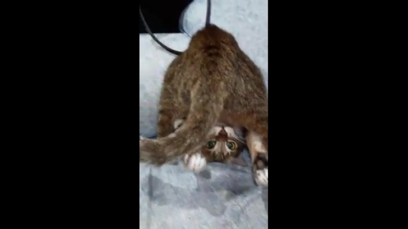 Котик вверх тормашками