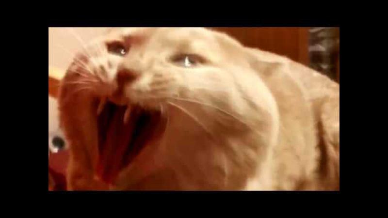 AAAAAAAAAAAAA--WARNING LOUD NOISE