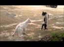Funny Cat video compilation Кошки Киски Смешное видео