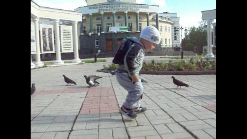г.Кудымкар. Среди голубей 28.6.2017 -1мин 28с
