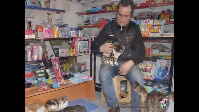 Владельцы магазинов Стамбула, когда город накрыли сильные снегопады, стали пускать в них на ночь бродячих собак и кошек!