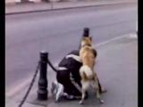 собака трахает мужика