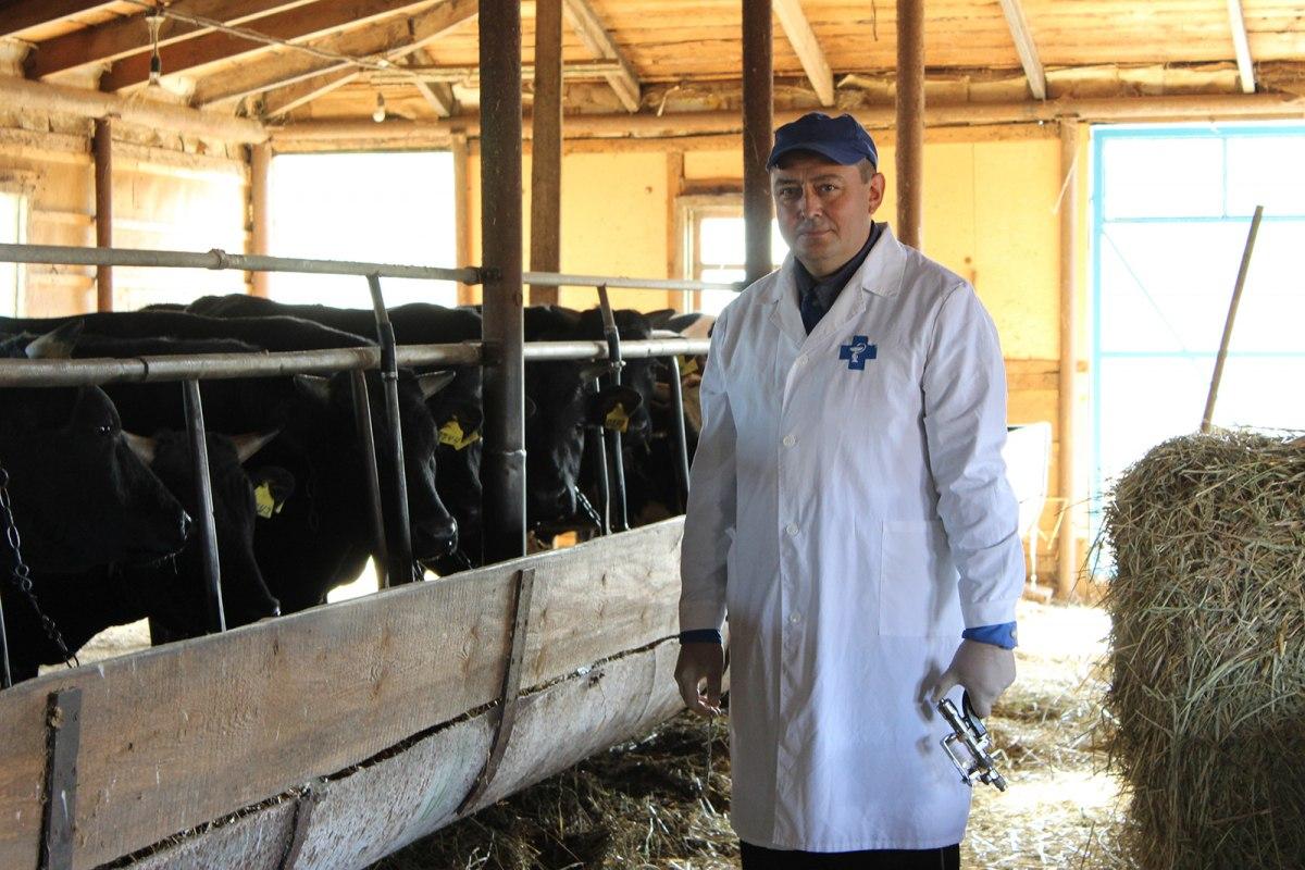 В Ростовской области стартовала массовая диспансеризация сельхозживотных
