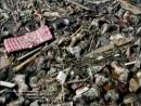 Poslednee vremya cunami v indiyskom okeane