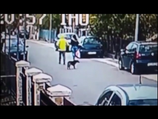Бродячая собака спасла женщину от нападения грабителя
