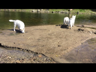 малыши хасята на речке