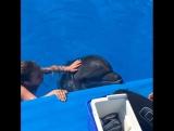 Дельфинчик Тор. Плавание с дельфинами. Ялта