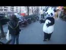 Панда кастует падение смех, хорошее настроение, улет, прикол, панды, животное, редкое, костюм, магия, загадка.