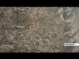 Анонс Итоги 28.01.16