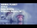 Animal Planet style Color Grading in Davinci Resolve 14