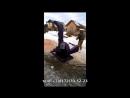 Щеподробилка ЩДС 8 рубительная машина дробилка дерева в щепу