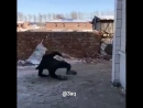 Типичная Махачкала 18 Самая в мире опасная Собака