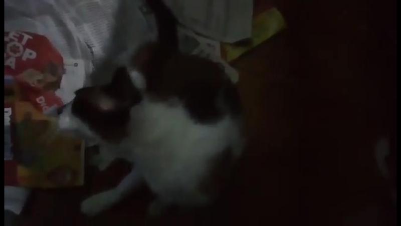 Isabel minha gatinha