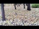 Белочка в Александровском саду