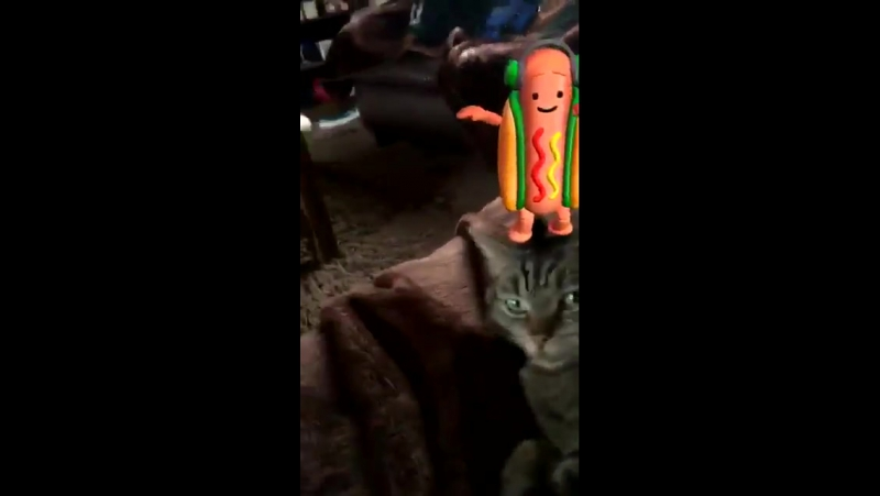 Everyone is talking about the dancing hot dog on snapchat. nobody is talking about this guy. dancinghotdog meme snapchatmeme