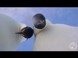 Пингвины научились делать селфи