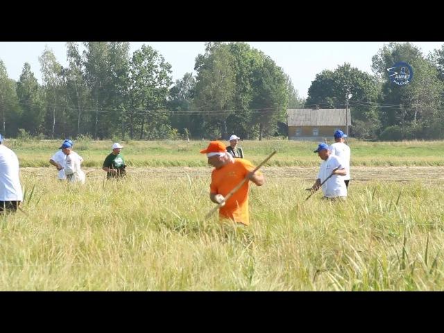 «СаммитТВ»: Сборная команда Витебской области приняла участие в чемпионате по косьбе на Брестчине