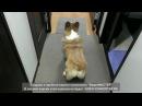 Танцующие животные собаки танцуют Dancing animals dog is dancind