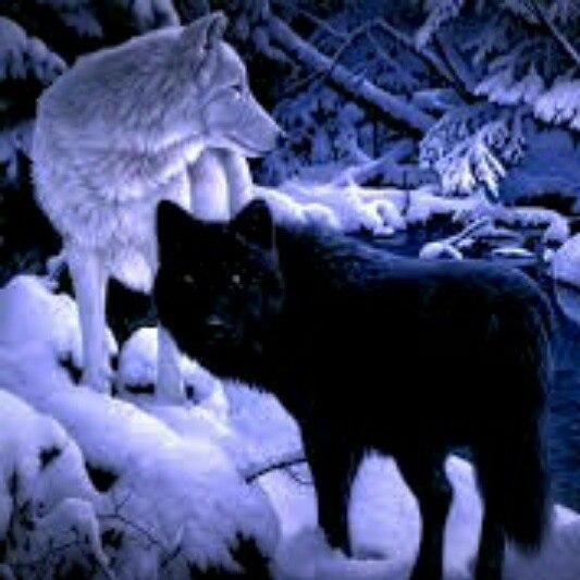 Легенда о Белой Волчице и Черном Волке AWuEQeUGMa8