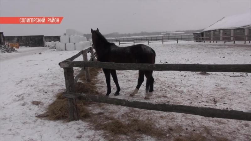 Табун лошадей в Солигорском районе находится в критическом положении