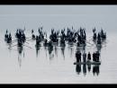 Трилогия Плачущий луг 2004 Режиссер Тео Ангелопулос драма история рус субтитры