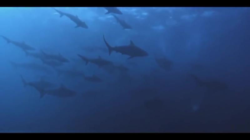 Умные дельфины ,удивительное зрелище охоты на косяк сардин