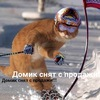 Кот Котов