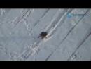 Ворона катается с крыши на майонезной крышечке Видео из Екатеринбурга