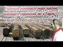 Украинцев шокировало видео эшелона, вывозящего украинский лес в Европу 2