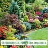 Пушкинский питомник декоративных растений