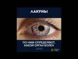 Глаза могут рассказать очень много о вашем здоровье