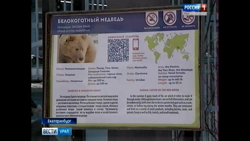 В Екатеринбургском зоопарке медведи вышли из зимней спячки