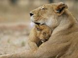 Заботливые мамы - Новорождённые ...