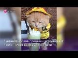 Кот из Вьетнама покорил пользователей соцсетей