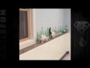 Смешные коты и кошки ДО СЛЁЗ Приколы с Котами 2017 Видео про котов.mp4