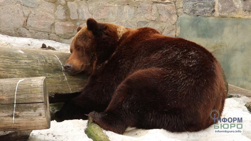 Весна прийшла: ведмеді харківського зоопарку прокинулися
