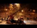 В Белгороде пожарные спасли кошку с высокого дерева