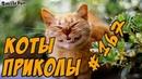 Смешные Коты ДО СЛЁЗ 2018 - Приколы с Котами и Кошками - Funny Cats
